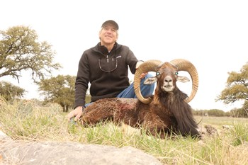 Texas Mouflon Hunt