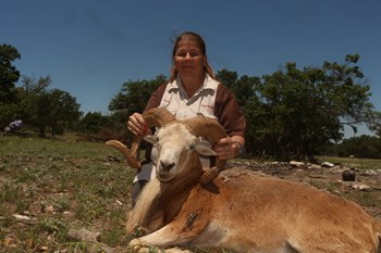 Blonde Texas Dall Ram Hunt
