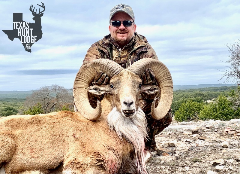 Transcaspian Urial Hunting in Texas