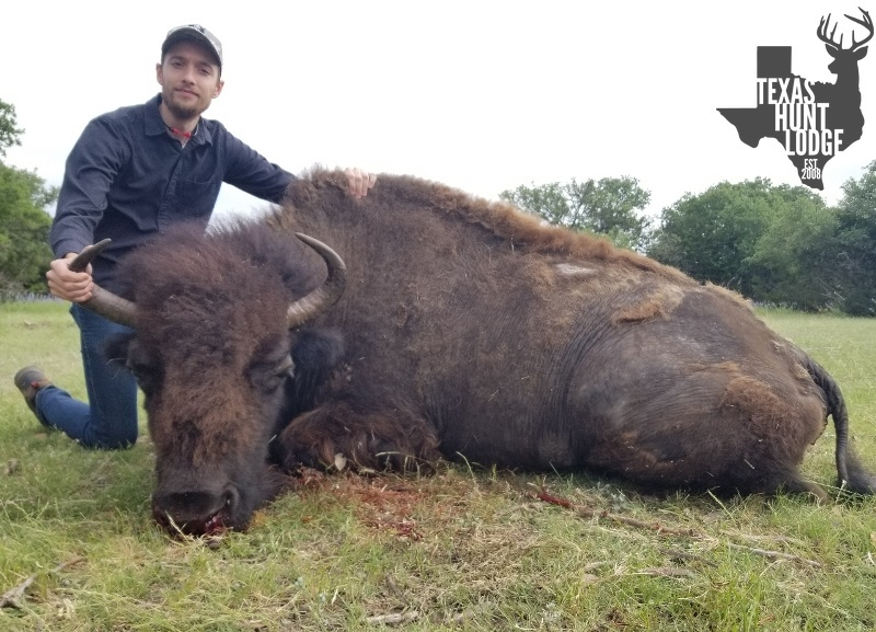 Buffalo Hunting in Texas