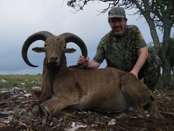 Aoudad Sheep Hunt