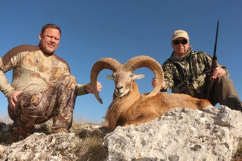Trophy Afghan Urial Hunt