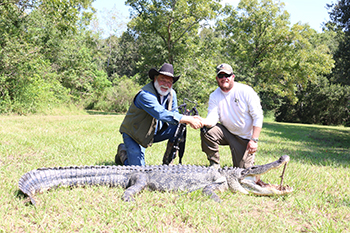 Texas Alligator Hunts