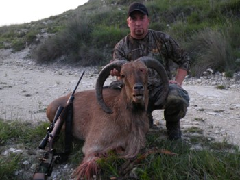 Texas Barbary Sheep Hunt